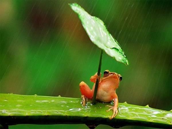 Mơ thấy ếch là điềm gì, đánh con gì?