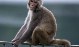 Nằm mơ thấy khỉ có ý nghĩa gì, đánh số mấy?